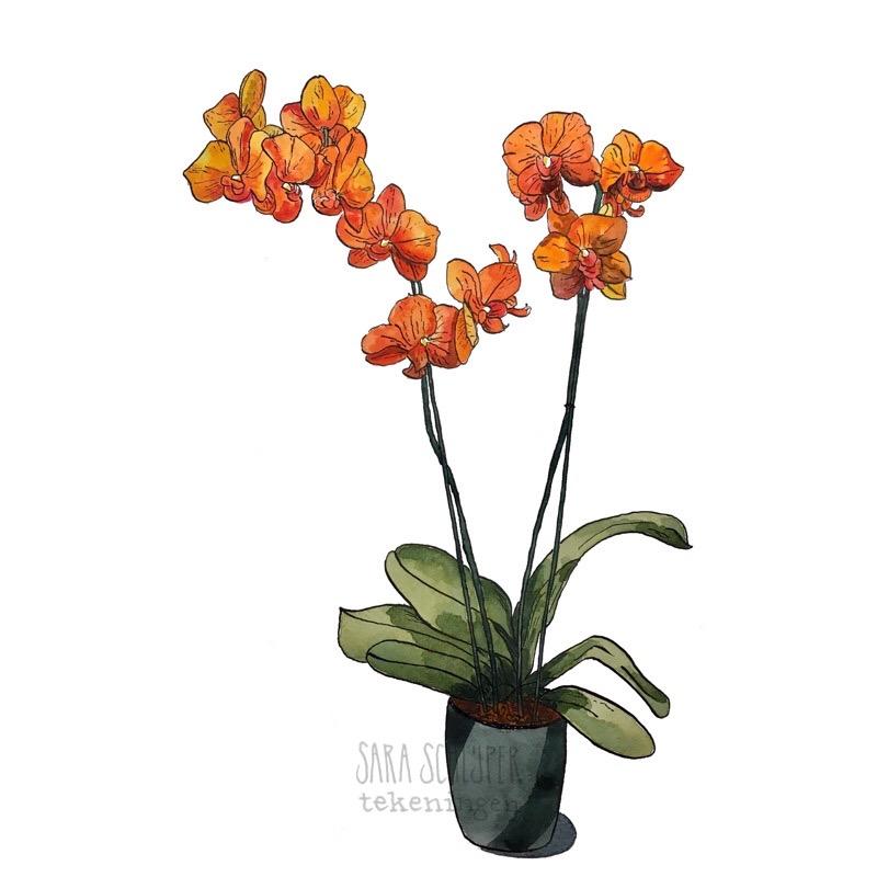 Tekening orchidee