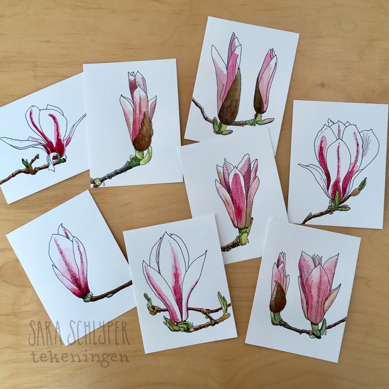 Foto tekeningen magnolia's