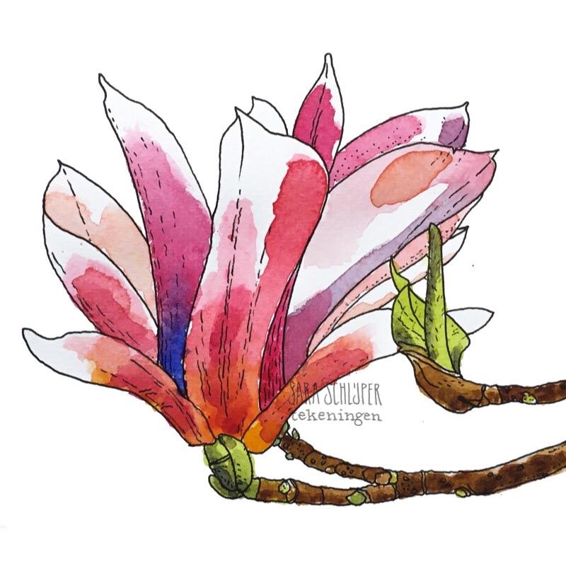 Tekening roze magnolia