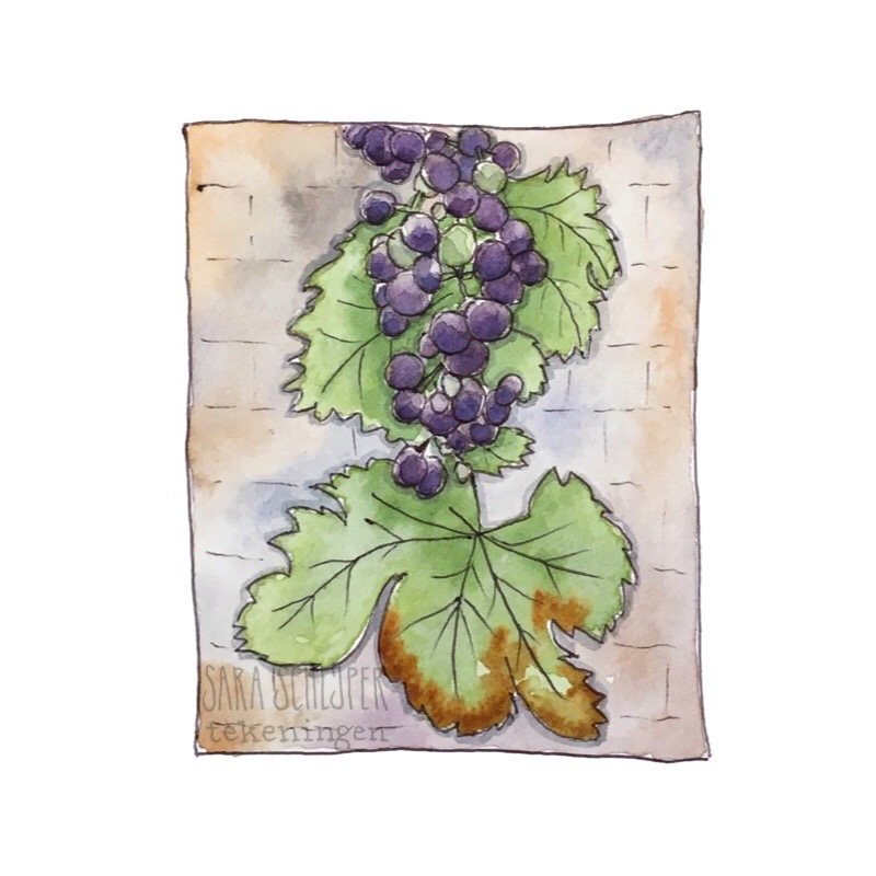 Tekening druiven