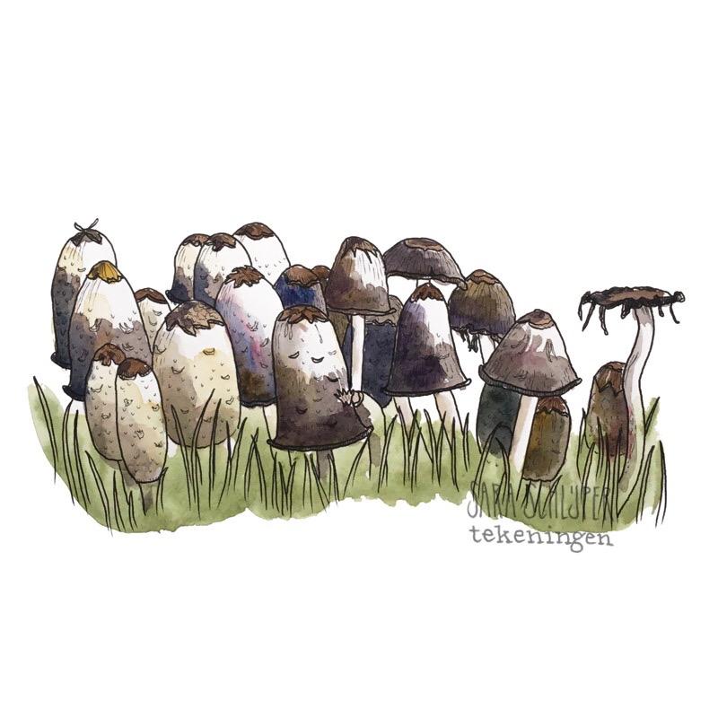 Tekening paddenstoelen