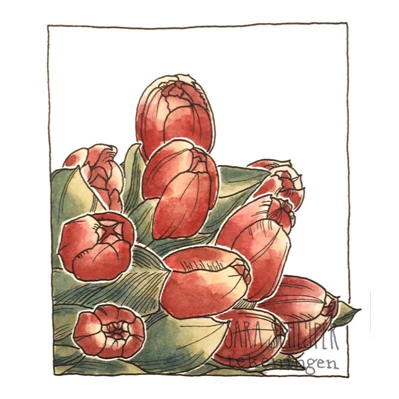 Tekening rood-gele tulpen
