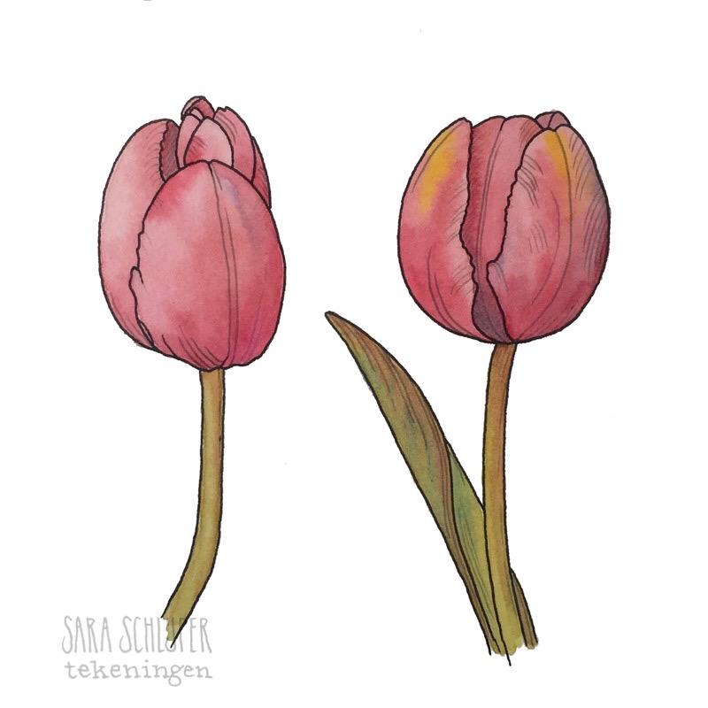 Tekening roze tulpen
