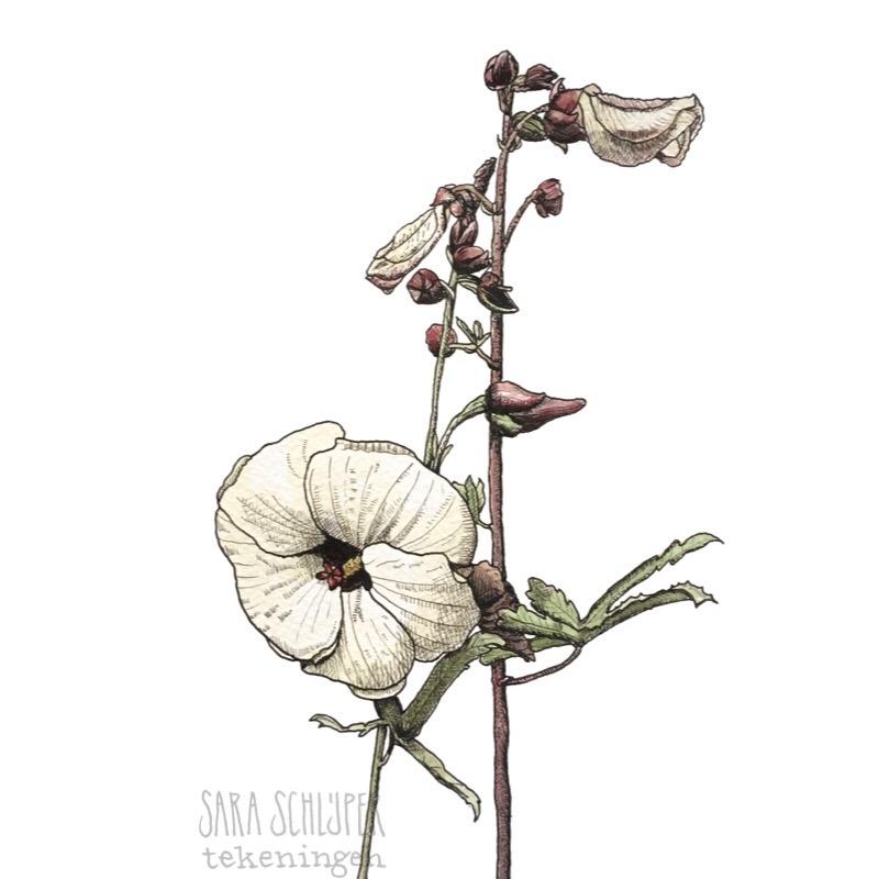 Tekening bloem in de botanische tuinen - Utrecht